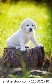 purebred puppy sitting on a stump in the forest and looking sad