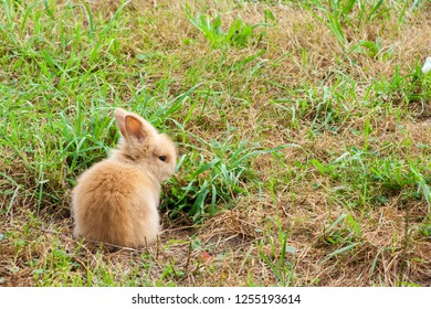 purebred rabbit sitting in the meadow