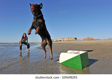 a purebred rottweiler and a woman playing with a flyball box on the beach