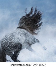 Purebred Spanish grey long-maned horse galloping during blizzard. Back view.
