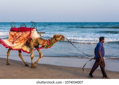 PURI - APRIL 15: A man walks his decorated camel looking for tourists on the sea beach on April 15, 2018 at Puri, Odisha, India. Camel ride on the beach is a popular tourist activity at Puri.