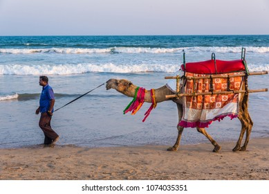 PURI - APRIL 15: A man walks his decorated camel looking for tourists on the sea beach on April 15; 2018 at Puri; Odisha; India. Camel ride on the beach is a popular tourist activity at Puri.