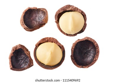Purified and unrefined macadamia nut isolated on white background,top view
