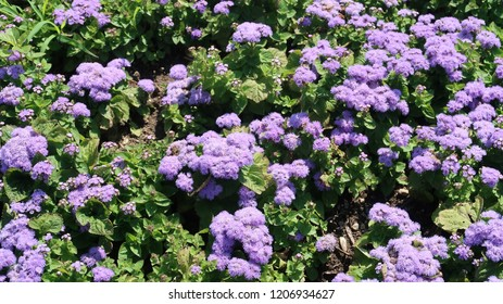 purle blooming flowers