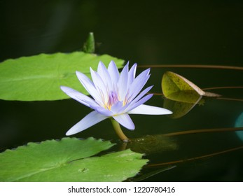 It is a purle water lily flower. Lotus flowers are very pretty and delicate.