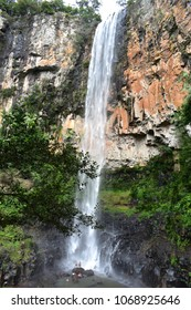 Purling Brook Falls in Springbrook National Park, Gold Coast Hinterland