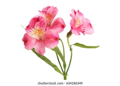 Alstroemeria flower images stock photos vectors shutterstock purple alstroemeria flowers isolated against white mightylinksfo Gallery