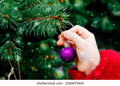 Purple ball on a live Christmas tree. New Year. Child hands Decorate the Christmas tree balls. Snowflakes, snow.
