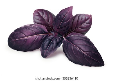 Purple basil leaves (tops). Clipping paths, infinite depth of field