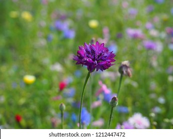 Purple beautiful macro flower photo background