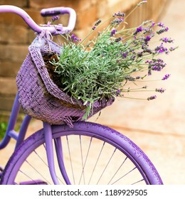 Purple Bicycle with Lavender Flowers in a Basket. Selective focus.