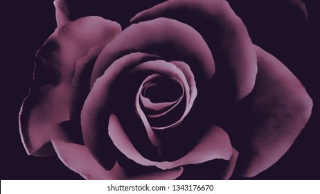 Purple and black color effect over a stylized garden rose, concept for deep emotions such as love, lust, longing or desire, or for feminine hygiene and health, horizontal background with copy space