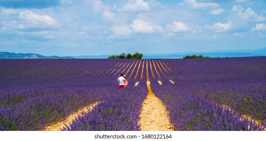 Purple blooming lavender field of Provence, France, on a sunny day with beautiful scenic sky and tree on horizon. Tourists on the lavender field. Summer vacations travel background.