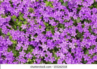 Purple bluebells as background