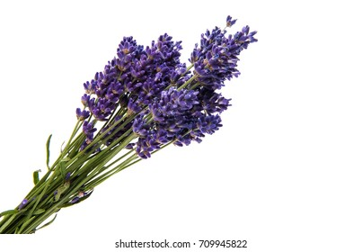 Purple bouquet Lavender flowers on white background