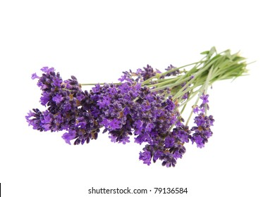 Purple flowers isolated on a white background ez canvas purple bouquet lavender flowers on white background mightylinksfo