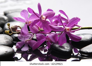 Purple branch orchid and black stones with reflection