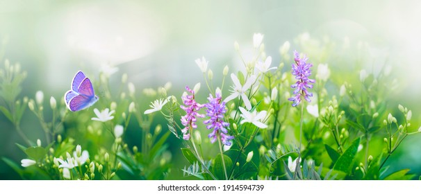Purple butterfly flies over small wild white flowers in grass in rays of sunlight. Spring summer fresh artistic image of beauty morning nature. Selective soft focus. - Shutterstock ID 1914594739
