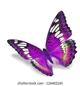 Purple Butterfly flying, isolated on white background
