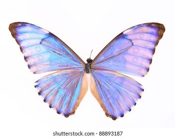 Purple butterfly isolated on a white background