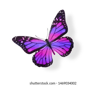 purple butterfly with pink stripes on the wings. isolated on a white background. tropical insect.