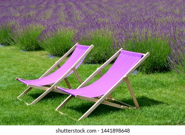 Purple chaise lounge and purple lavender in the background. Two purple loungers are standing on the grass next to the lavender field. purple deck chairs. Perfect vacation