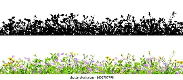 violette Kleenblumen und Gras einzeln auf schwarzem Hintergrund mit Alpha-Maske für einfache Isolierung