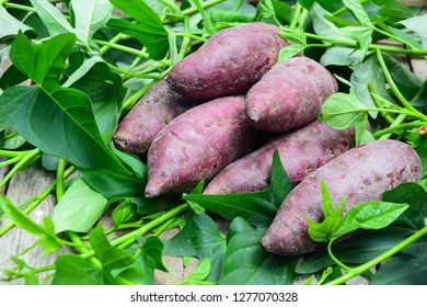 Purple color sweet potatoes on a wooden table top with sweet potato's leaves.