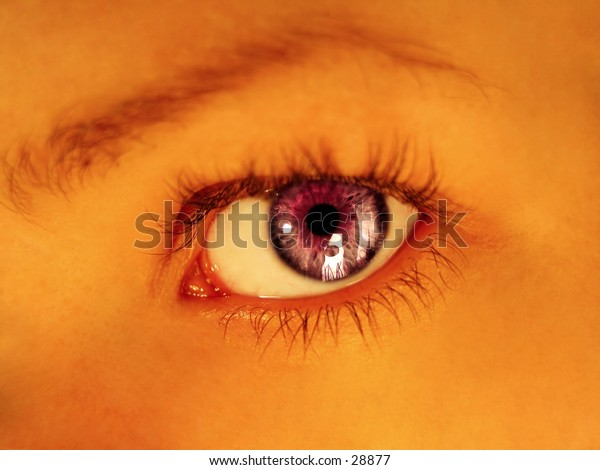 Purple colored eye staring directly into camera. Warm tones, focus on eye.