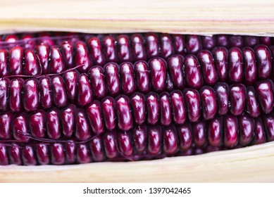Purple corn fresh close up / Siam Ruby Queen or sweet red corn on cob