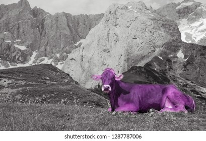 Purple cow in Alps