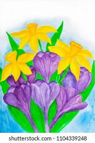Purple crocuses and yellow daffodiles