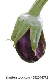 Purple eggplant close up isolated on white.
