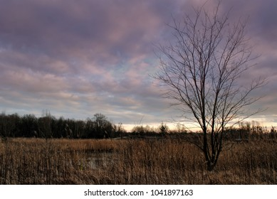 Purple evening sky with wonderful clouds formations above autumn ruthless tree and yellow grass. Pond between bushes. Serene mood of rural countryside view. Scenic beautiful scenery, forest and nature