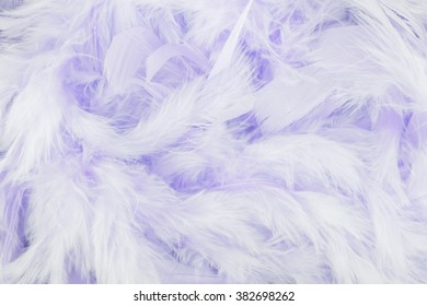 Purple feathers background