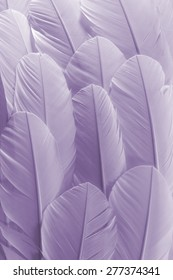 Purple Feathers Texture Background. Close Up View of Feathers Pattern.