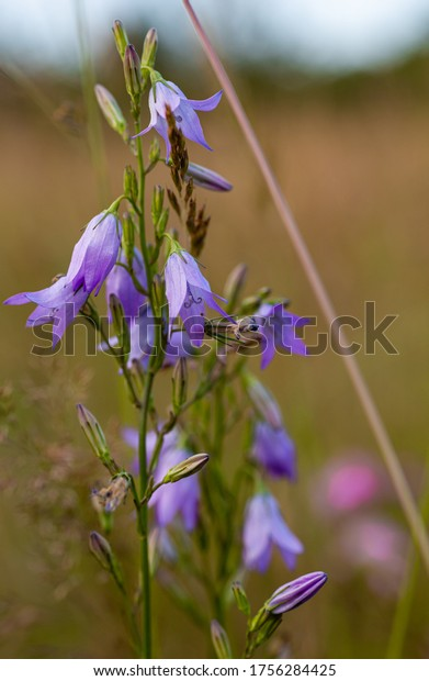 Purple field flower. Wildlife. Fresh plants.