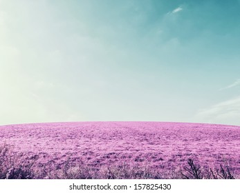 Purple field on sky, infrared effect