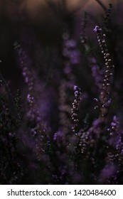 purple flower abstrakt lila flower
