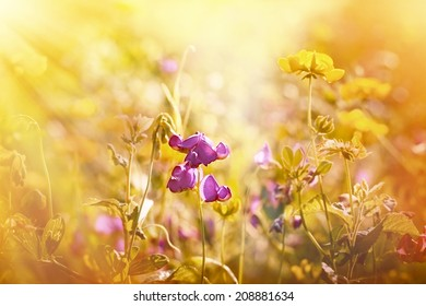 Purple flower between yellow meadow flowers