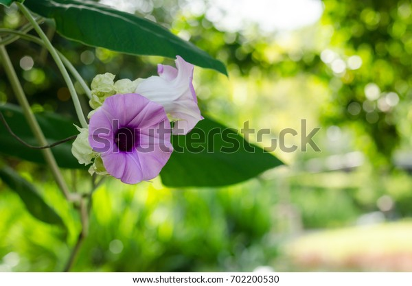 Purple flower and blur background in the green and fresh garden