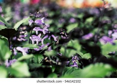 Purple flower in botanical