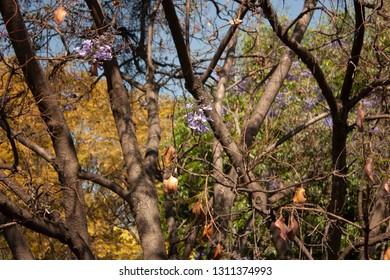 Purple flower bud before entering spring