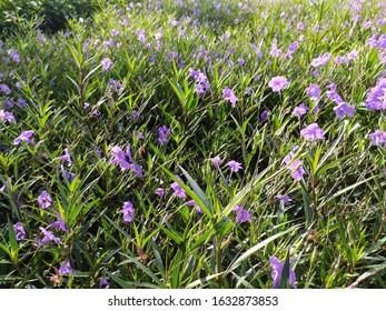 Purple flower field blossom in park