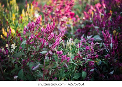Purple flower garden