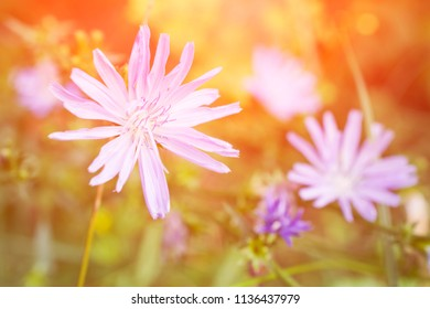 purple flower in the grass