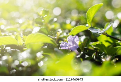Purple flower and green leaves on blured background, Bokeh nature background.