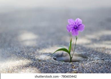 Purple flower growing on crack street background