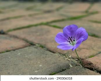 Purple Flower growing out of Brick Walkway