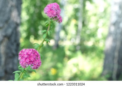 Purple Flower head on the summer forest background.